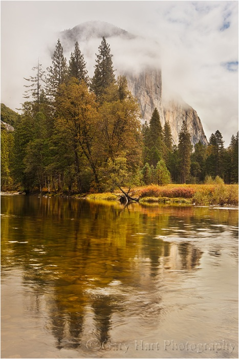In this image I split the frame 50/50, but dialed down the reflection with my polarizer. Even polarized, the bright sky's glare washed out much of the river surface, painting the outline of El Capitan like a negative that uses the trees with a jigsaw of submerged river rocks.