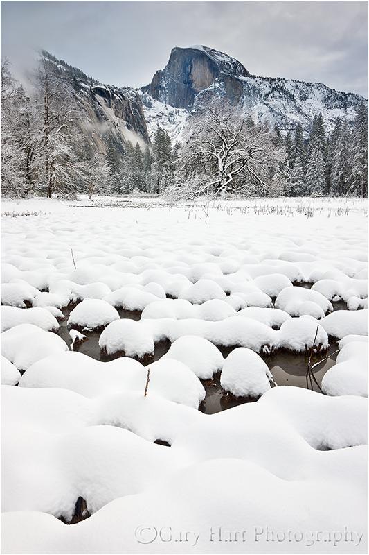 Fresh Snow, Cook's Meadow, Yosemite