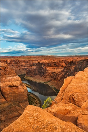Flowers and Red Rocks, Horseshoe Bend, Colorado River, Arizona