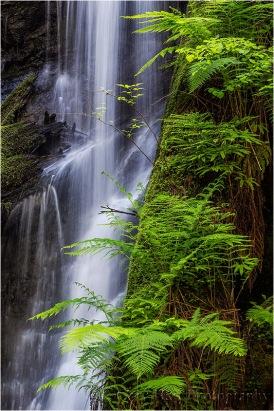 Fern Cascade, Russian Gulch Fall, Russian Gulch State Park (Mendocino), California