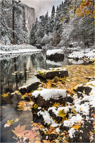 Snow on Autumn Leaves, El Capitan and the Merced River, Yosemite