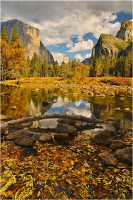 Floating Leaves, Valley View, Yosemite