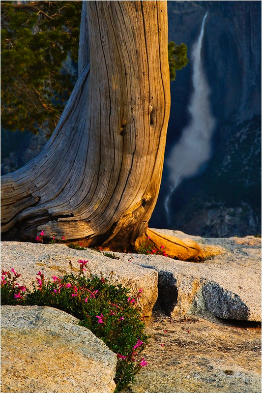 Morning Light, Yosemite Falls from Sentinel Dome