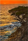 Gary Hart Photography: Cypress at Sunset, Point Lobos, Big Sur