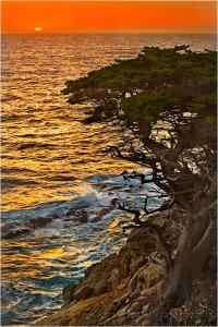 Gary Hart Photography: Cypress at Sunset, Point Lobos, Big Sur