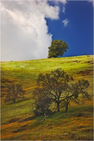 Spring Afternoon, Sierra foothills