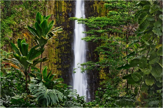 Tropical Plunge, Akaka Falls State Park, Hawaii