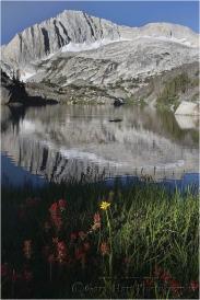 Wildflowers and North Peak, Twenty Lakes Basin