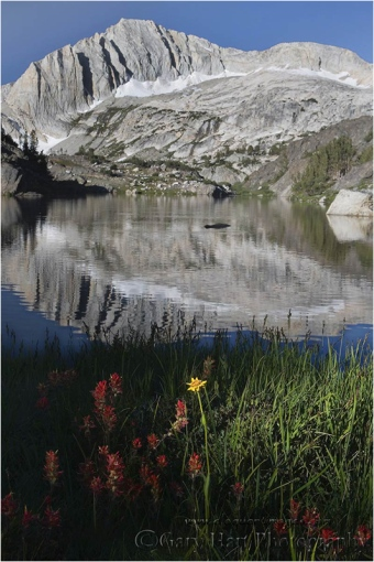 Wildflowers and North Peak, Twenty Lakes Basin