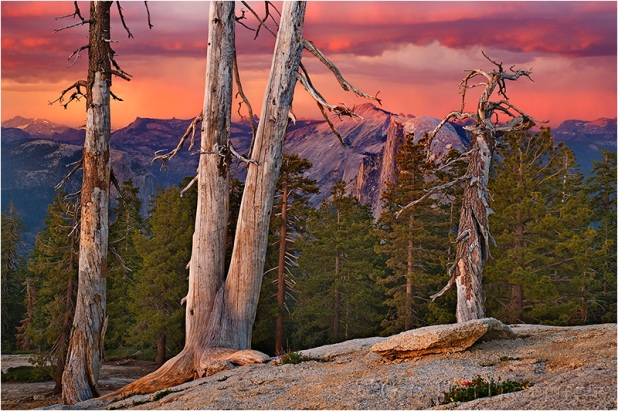 Half Dome and Trees at Sunset, Sentinel Dome, Yosemite