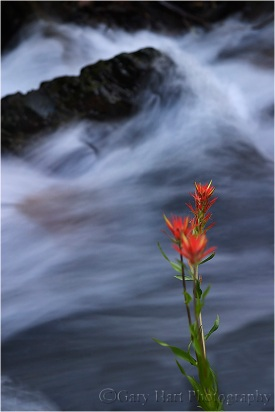 Paintbrush, Mill Creek, Lundy Canyon