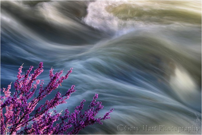 Redbud, Merced River