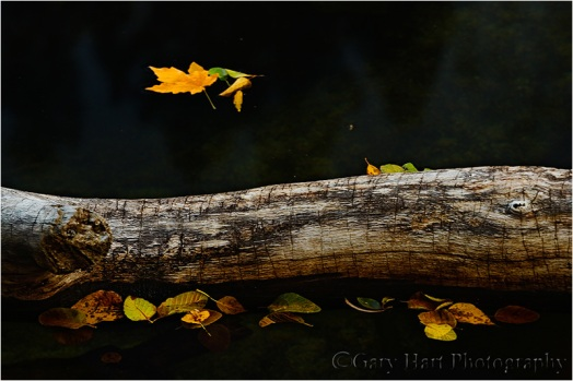 Floating Leaves, Merced River, Yosemite