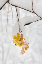 Autumn Leaves (and winter arrives), Yosemite