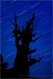 Bristlecone Night Silhouette, White Mountains, California