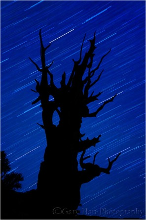 Bristlecone Night Silhouette, White Mountains, California