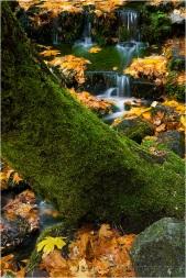 Fallen Color, Fern Spring, Yosemite