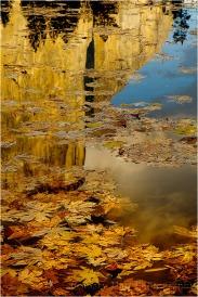 Leaves and Reflection, El Capitan, Yosemite