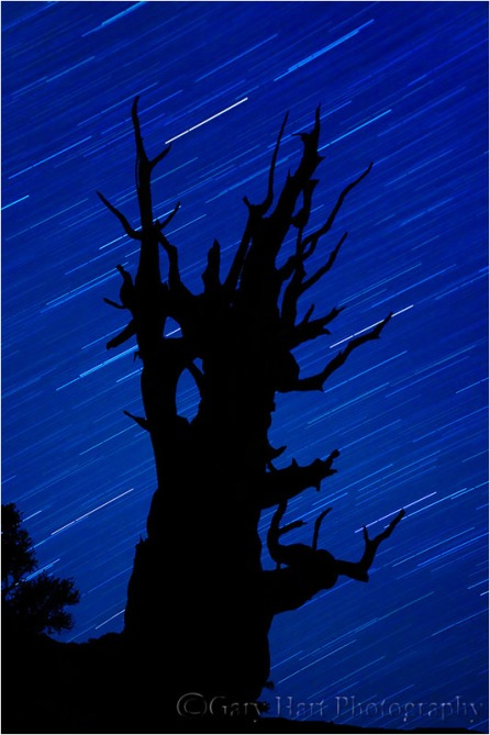 Bristlecone Star Trails, White Mountains, California