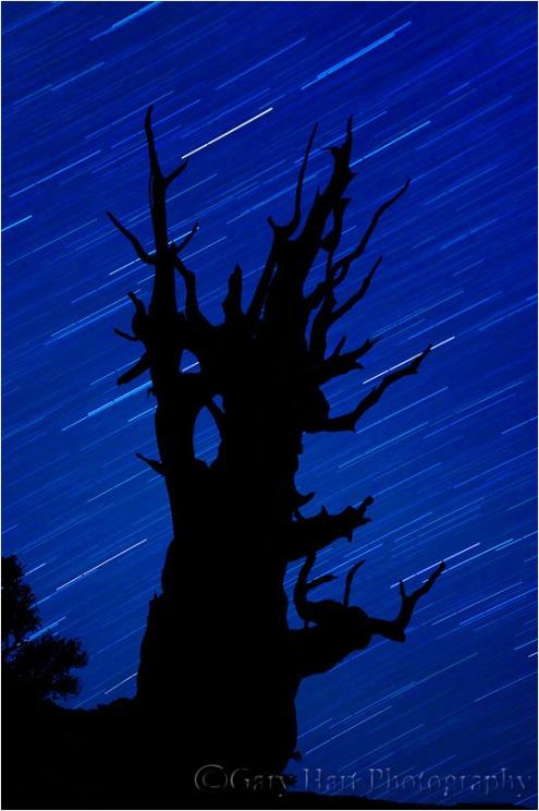 Bristlecone Star Trails, White Mountains, California
