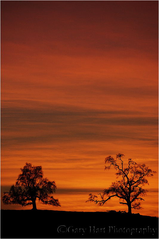 Gary Hart Photography, Oaks on Fire, Sierra Foothills, California