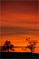 Gary Hart Photography, Hilltop Oaks, Sierra Foothills, California
