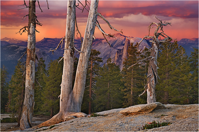 Sunset and Trees, Half Dome from Sentinel Dome, Yosemite