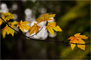 Gary Hart Photography, Autumn Light, Yosemite