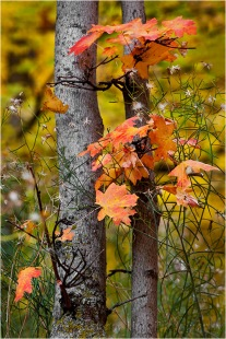 Gary Hart Photography: Autumn Bouquet, Zion
