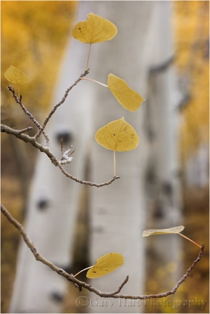 Gary Hart Photography: Aspen, Bishop Creek Canyon, Eastern Sierra