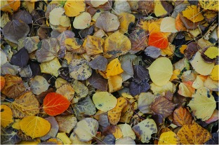 Fallen Color, Rock Creek Canyon, Eastern Sierra