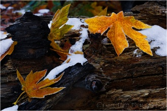 Gary Hart Photography: Leaves and Snow, Cathedral Beach, Yosemite