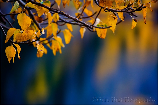 Leaves and Reflection, Convict Lake, Eastern Sierra