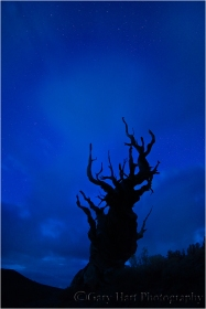 Gary Hart Photography: Bristlecone Starlight, White Mountains, California