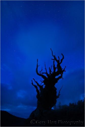 Gary Hart Photography: Bristlecone Starlight, White Mountains, California