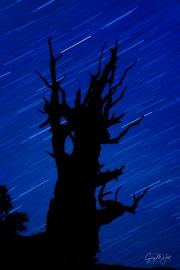 Gary Hart Photography: Bristlecone Star Trails, Schulman Grove, White Mountains, California