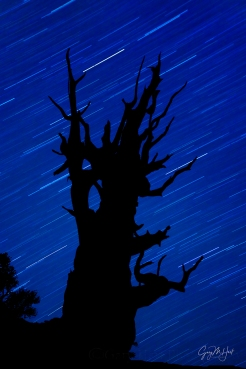 Gary Hart Photography: Bristlecone Star Trails, Schulman Grove, White Mountains, California