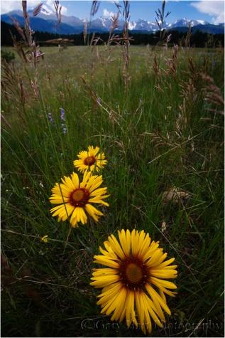 Spring Meadow, Rocky Mountain National Park, Colorado