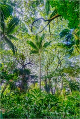 Gary Hart Photography: Looking Up, Hawaii Tropical Botanical Garden, Hawaii