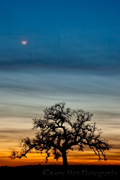 Gary Hart Photography: Oak and Crescent, Sierra Foothills, California