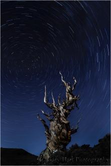 Gary Hart Photography: Cradled Moon, Schulman Grove, Bristlecone Pine Forest, California