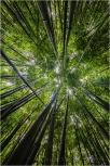 Bamboo Sky, Maui, Hawaii