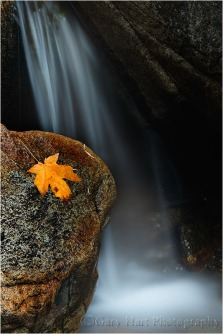 Gary Hart Photography: Autumn Leaf, Bridalveil Creek, Yosemite