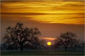 Gary Hart Photography: Oaks at Sunset, Sierra Foothills