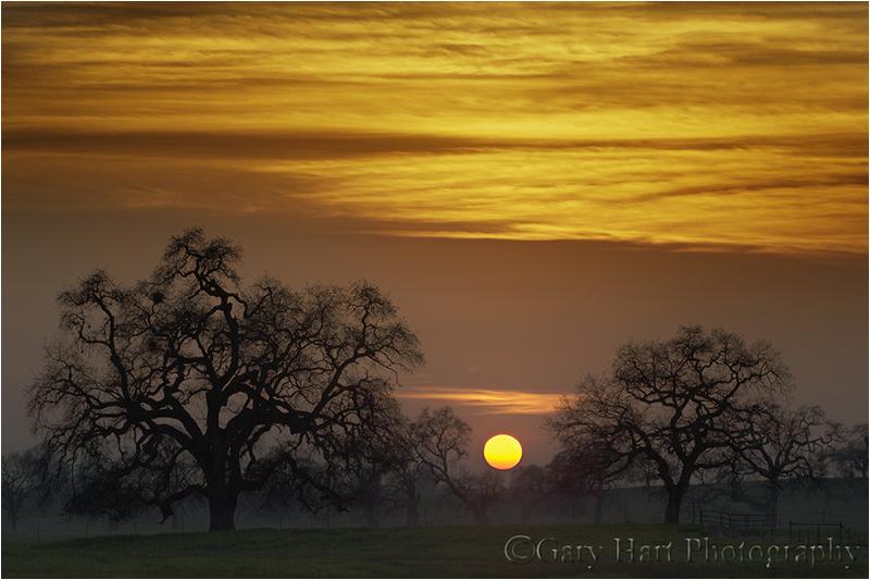 Oaks at Sunset, Sierra FoothillsCanon EOS-1D Mark II1/250 secondF/11.0ISO 200131 mm