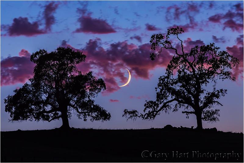 Dusk, Crescent Moon and Oaks, Sierra Foothills, California