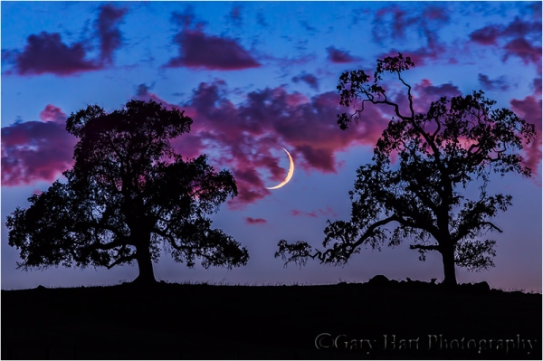 Crescent and Oaks at Dusk, Sierra Foothills, California
