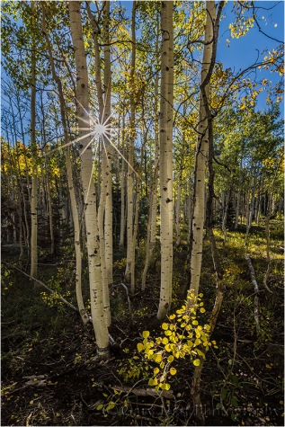 Gary Hart Photography: Autumn Light, North Rim, Grand Canyon