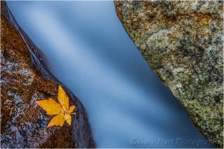 Leaf, Bridalveil Creek, Yosemite