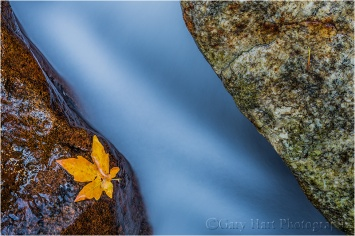 Leaf, Bridalveil Creek, Yosemite